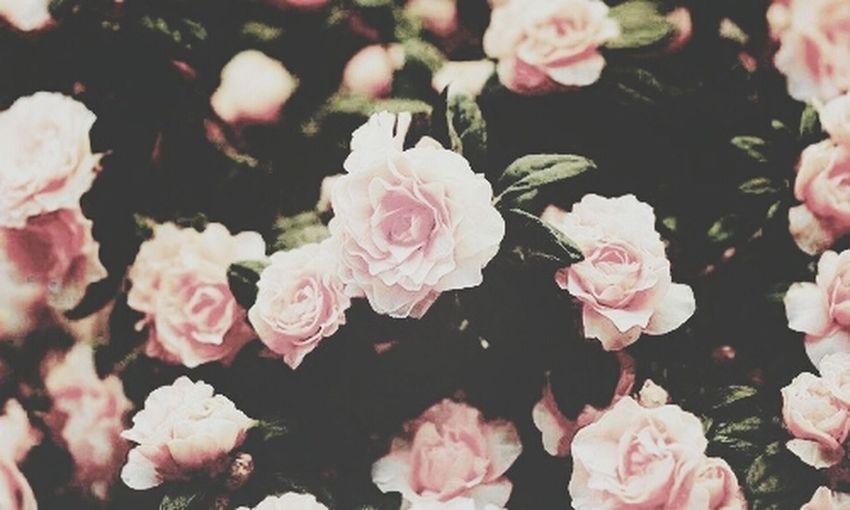 Flowers beautiful love First Eyeem Photo