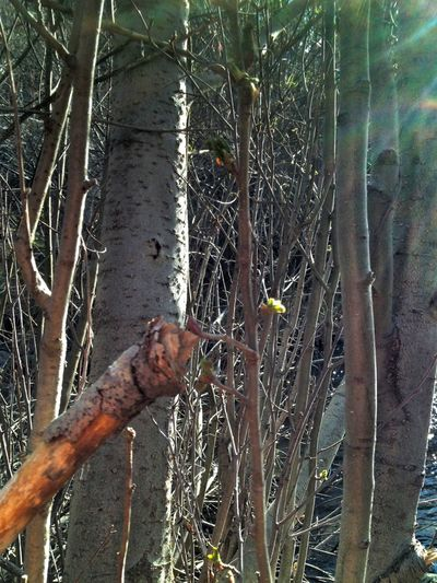 TreePorn Snapseed Editing  EyeEm Nature Lover