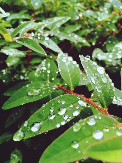 Leaf Growth Nature Water Drop Wet Close-up Plant Beauty In Nature RainDrop Long Goodbye EyeEmNewHere EyeEmNewHere