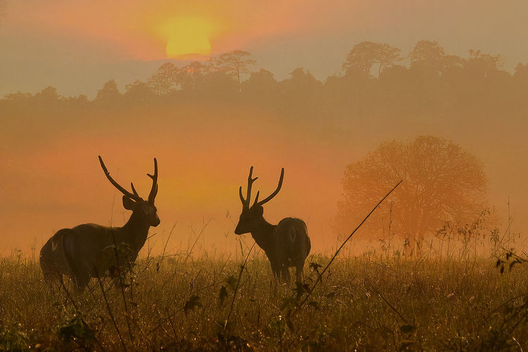 View of deer on field during sunset