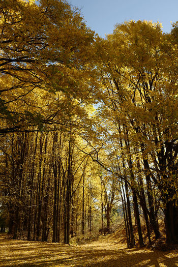 Shot at Bright, Victoria in autumn. Autumn Beauty In Nature Change Day Forest Growth Landscape Leaf Nature No People Outdoors Scenics Sky Tranquil Scene Tranquility Tree Tree Trunk