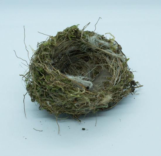 Close-up of bird nest on white background