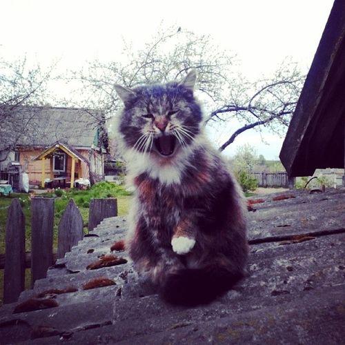 Яма-а-а-ай-кааааа!!1 Belarus Countryside Cat Catpic