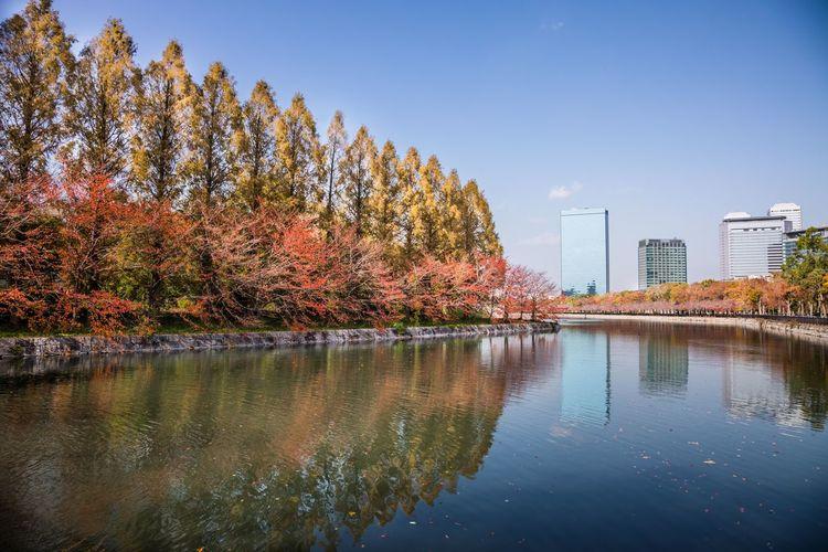 メタセコイアと桜の紅葉 大阪城公園 OSAKA Japan Water Autumn Reflection Tree Change Multi Colored Sky Architecture Building Exterior Urban Skyline