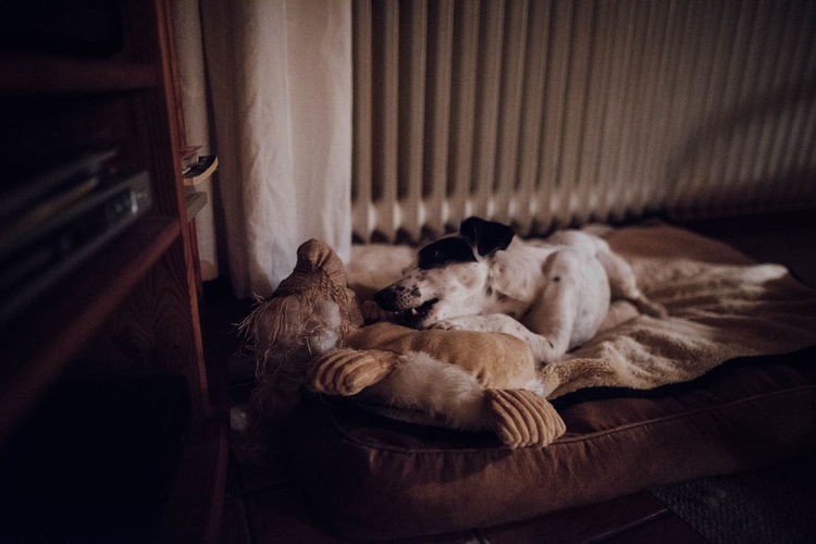 Dog lying on pet bed at home