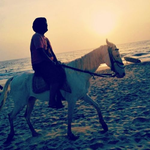 Horse Beach Sunset Chilling Peace Goa