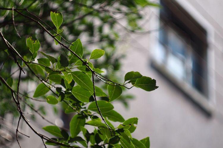 Oldlense Green Window