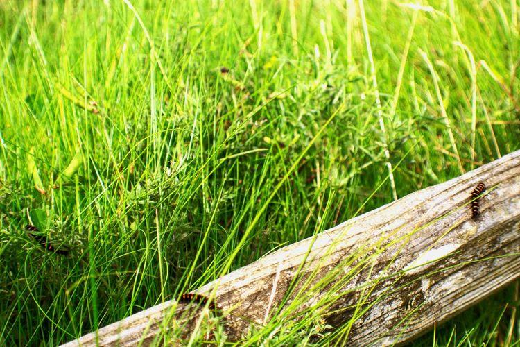 Colour Of Life Green Green Grass Nature Nature Photography Ireland Ring Of Kerry Caterpillars  Life