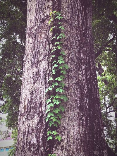Plant Tree Growth No People Trunk Nature Tree Trunk Low Angle View Beauty In Nature Green Color Outdoors Sunlight Forest Branch Day