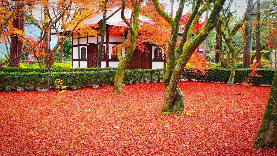 真如堂 真正極楽寺 京都 Kyoto Autumn Beauty In Nature Travel Destinations Kyoto Autumn Autumn Colors Autumn Leaves Kyoto, Japan Autumn Enjoying Life Relaxing Hello World Kyototrip 2015