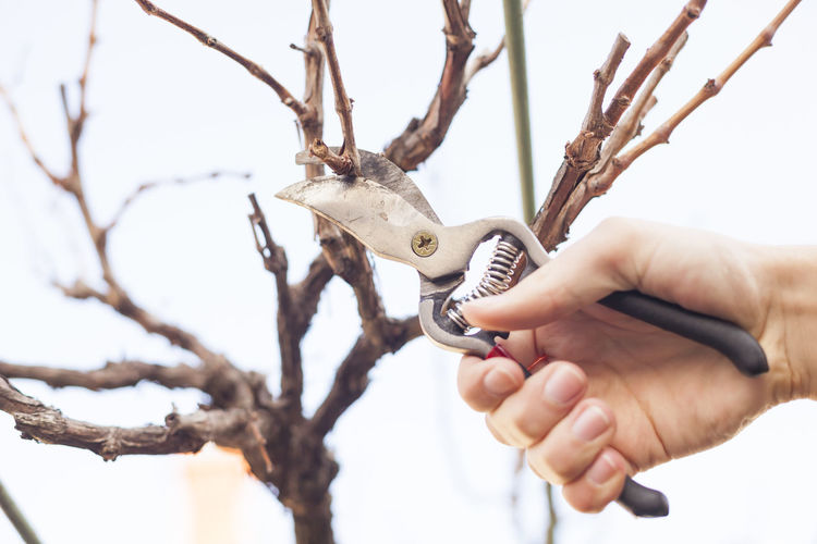 Cropped Hand Cutting Branches With Pliers