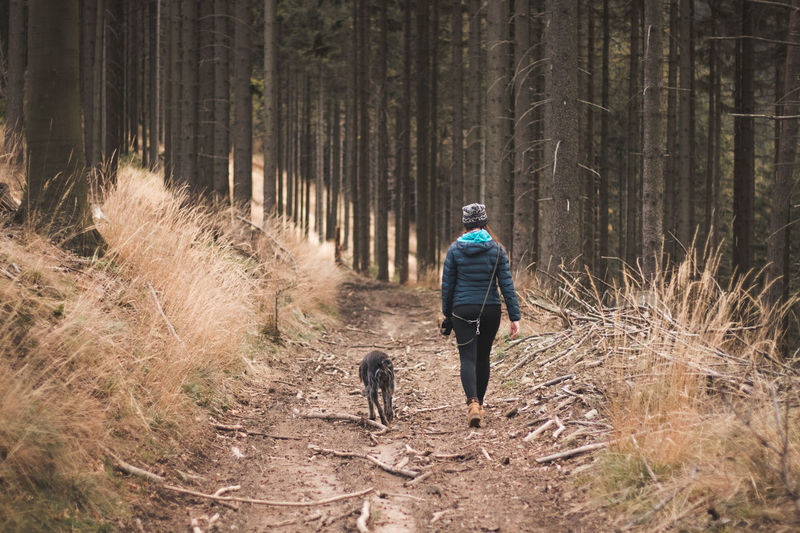 Rear view of woman with dog walking in the forest