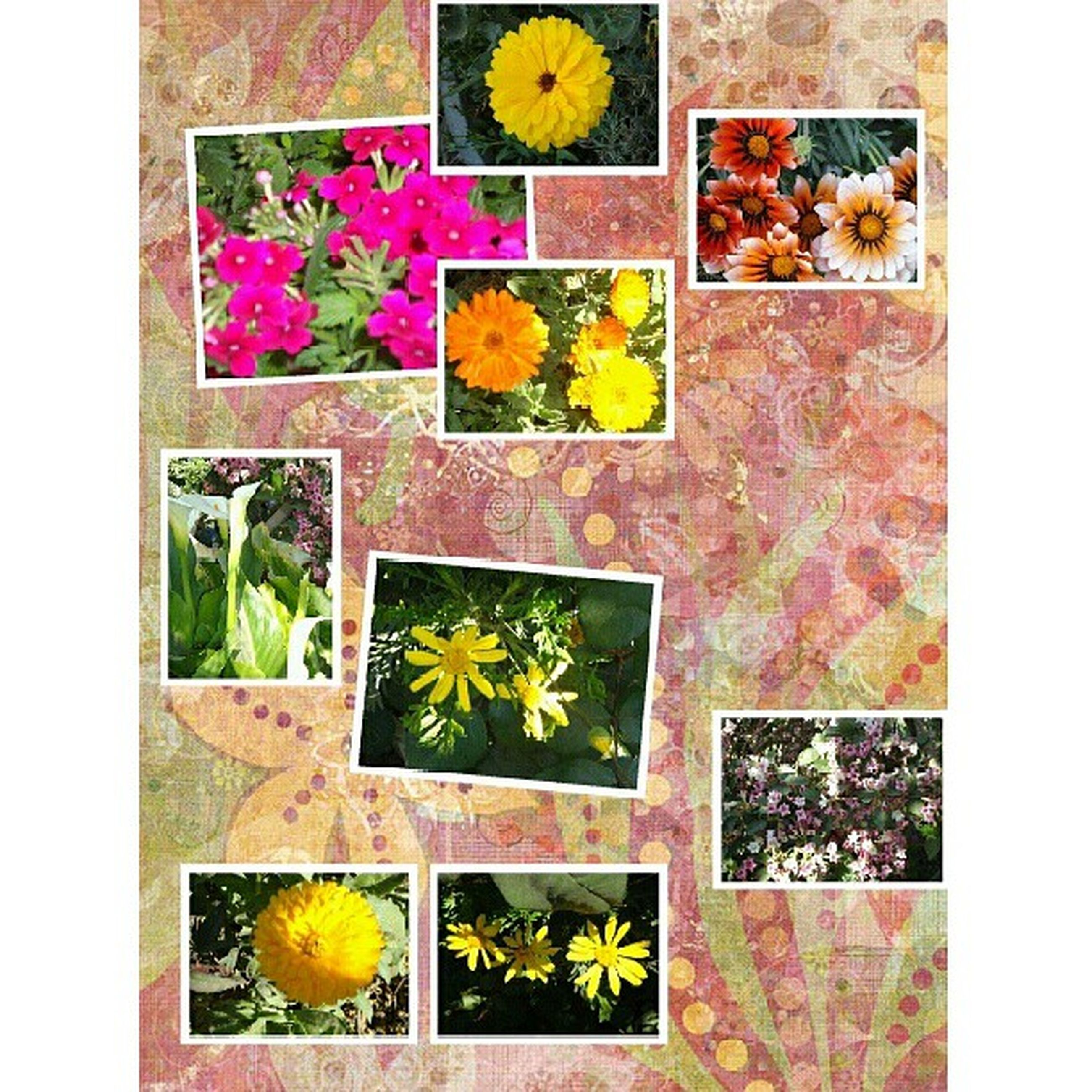 yellow, flower, transfer print, multi colored, wall - building feature, auto post production filter, full frame, art and craft, creativity, art, plant, wall, fragility, growth, leaf, backgrounds, vibrant color, nature, day, no people