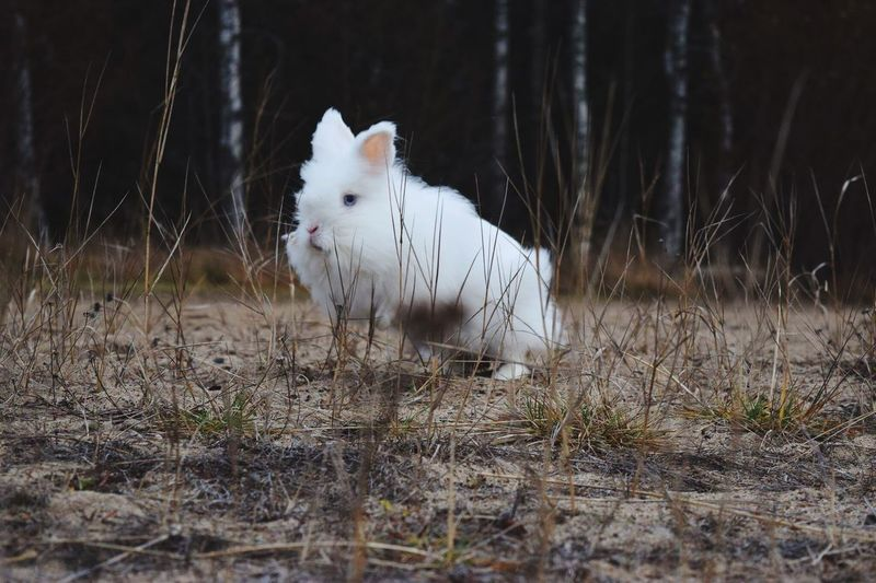 Animal Themes One Animal Domestic Animals Pets Mammal No People Field Grass Nature Outdoors Day Check This Out Rabbit