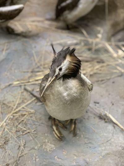 High angle view of bird on field