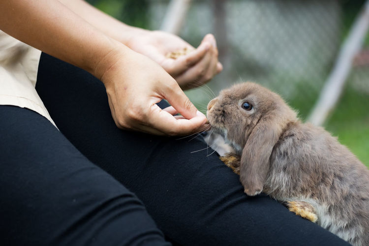 Cute rabbit eating pellet food from owner woman hand. hungry rabbit eating food in the meadow.