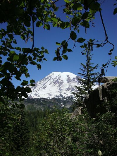 Mont Rainier Blue Meets Green