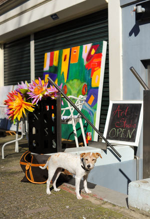 Artstore Amsterdam Animal Themes Architecture Art Art Store Building Exterior Built Structure Colorful Cultural Cute Day Dog Domestic Animals Flowers Gallerie Mammal No People Outdoors Painting Painting Art Pets Pets Of Eyeem Sightseeing Sunny Tourism