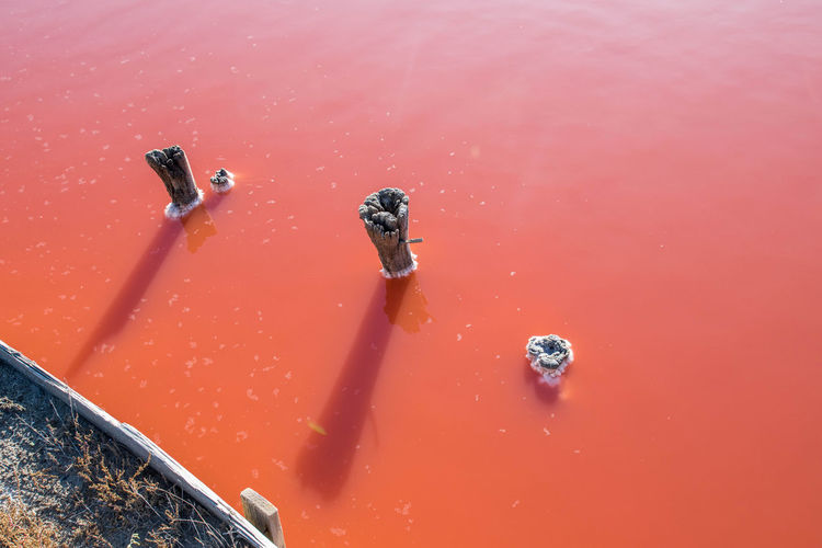 High angle view of pink water on land