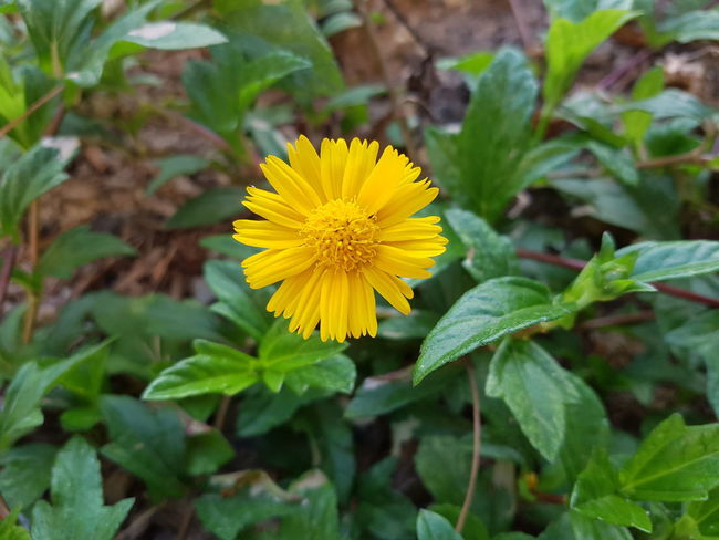 Green, yellow... Flower Nature Beauty In Nature Growth Close-up Outdoors No People Wildflower Day Yellow EyeEm Nature Lover 3XSPUnity Summertime Enjoying Life Rio De Janeiro Taking Photos Hello World Beauty In Nature Secret Garden Flowers,Plants & Garden Flower Photography