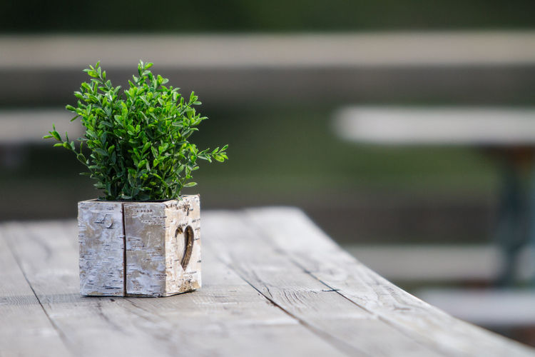 Decoration at a hut in the Chiemgau, Bavarian Alps, Germany. Bavaria Green Color Wood Beauty In Nature Boxwood Close-up Day Decoration Focus On Foreground Germany Green Color Growth Leaf Mountain Nature No People Outdoors Plant Plant Part Potted Plant Selective Focus Still Life Table Tree Wood - Material