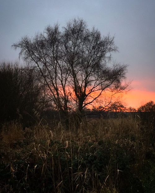 Before sunset Nature Tree Sunset Tranquility Bare Tree No People Beauty In Nature Silhouette Sky Outdoors Tranquil Scene Field Growth Landscape Grass Murmuration Murmuration Of Starlings Nature Scenics Day RSPB Rspb_love_nature Somerset Somerset England