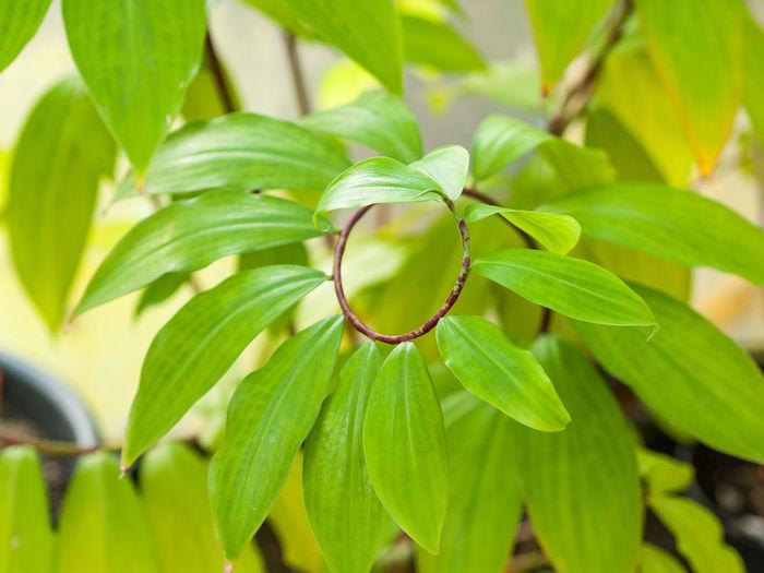 Circle Green Leafs Plant Spiral