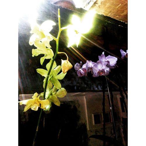 Capturemoment Flowers For Passion! Flower Flowers,Plants & Garden Flowerporn Light And Shadow Tadaa Community Cameraphonephotography Best EyeEm Shot Eyemphotography EyeEm Nature Lover EyeEm Gallery