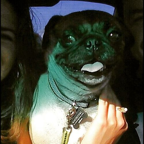 Usual suspects. All smiles. Thugpug Marley Zrock