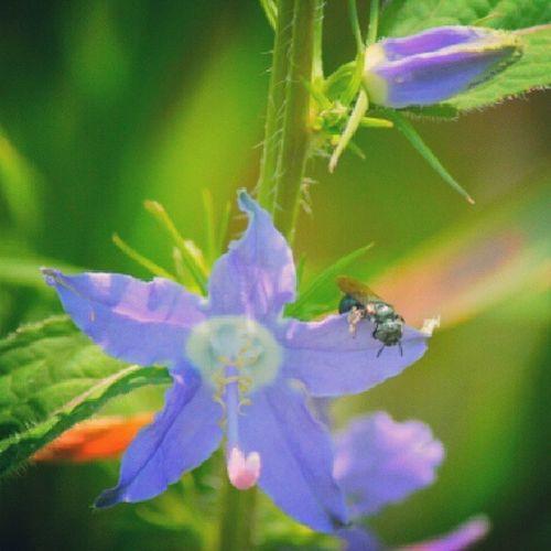 Animazing_wildlife Fabmacro Insect_perfection Underdogs_nature nature_perfection wildlife_perfection