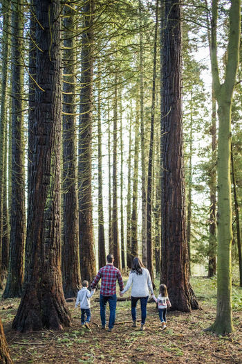 Rear view of people walking in forest