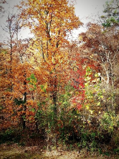 Full Frame Backgrounds Tree Day Outdoors Nature No People Multi Colored Growth Close-up Beauty In Nature Sky