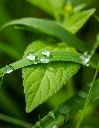 Leaf Water Defocused Close-up Animal Themes Plant Green Color Butterfly - Insect Damselfly Grasshopper Symbiotic Relationship Leaf Vein Animal Antenna Insect Animal Markings Cocoon Pollination Dew Ant Drop Blade Of Grass RainDrop Arthropod Lantana Animal Wing