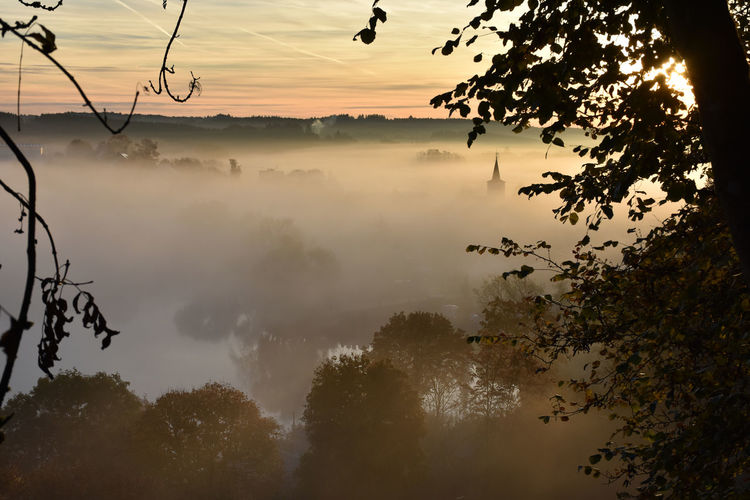 Trees by river in foggy weather during sunrise