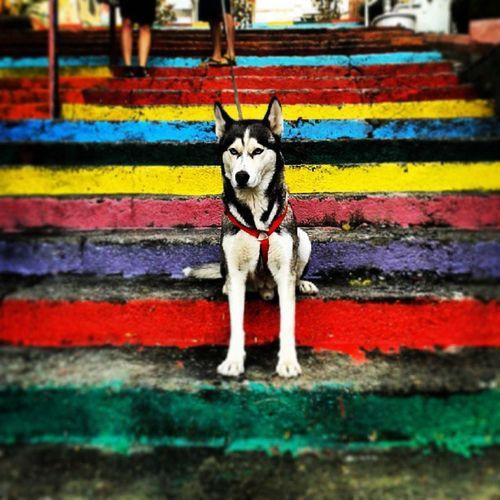 Kuzen Yuri nin de bi fotosu olmalı o merdivenlerde Yuri Husky Rainbow Guard