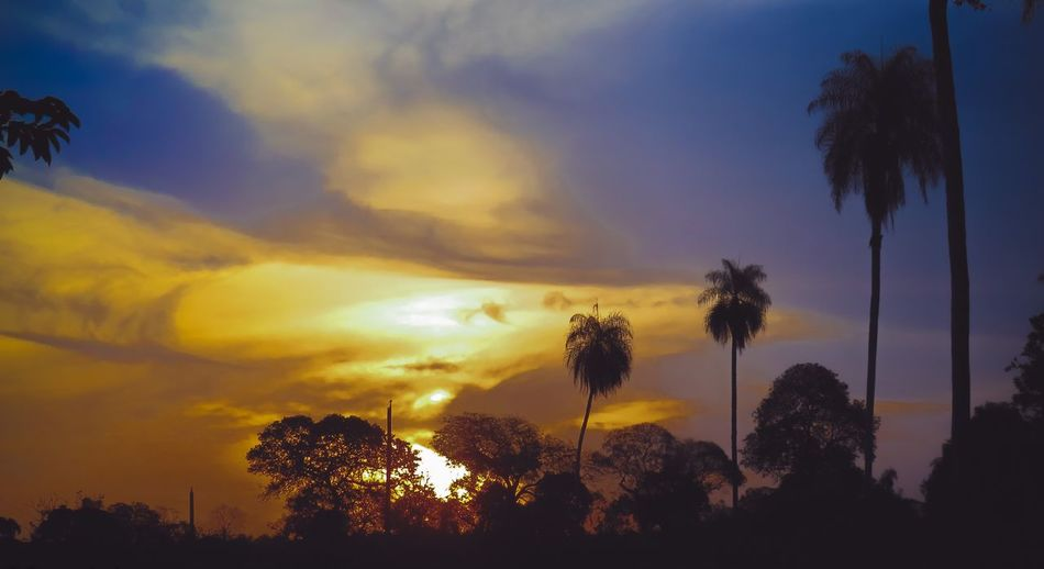 Sunset in Golden Hour Golden Hour Photography Photographie  Tree Sunset Palm Tree Silhouette Multi Colored Sky Cloud - Sky Treetop Tree Trunk Bark Plant Bark WoodLand Bare Tree Branch Fallen Tree Woodpecker Palm Frond Single Tree Long Shadow - Shadow Flower Head Blooming Thistle Woods Streaming Petal Pollen Growing