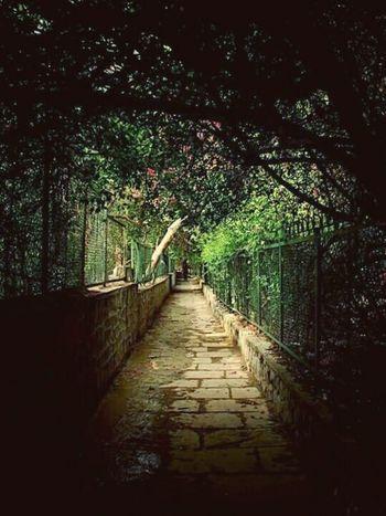 Park New Delhi Discover Your City EyeEm Best Shots Hauz Khas Hauzkhasvillage Thegreatoutdoorswithadobe
