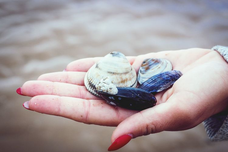 Close-up of hand holding shells on beach