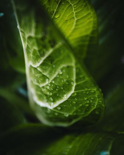 There's so much better in nature, you just have to know where to look. 🌿💧 Leaf Green Color Close-up Nature No People Day Freshness Beauty In Nature Tree Indoors  Rain Raindrops Plants Plants Of Eyeem First Eyeem Photo