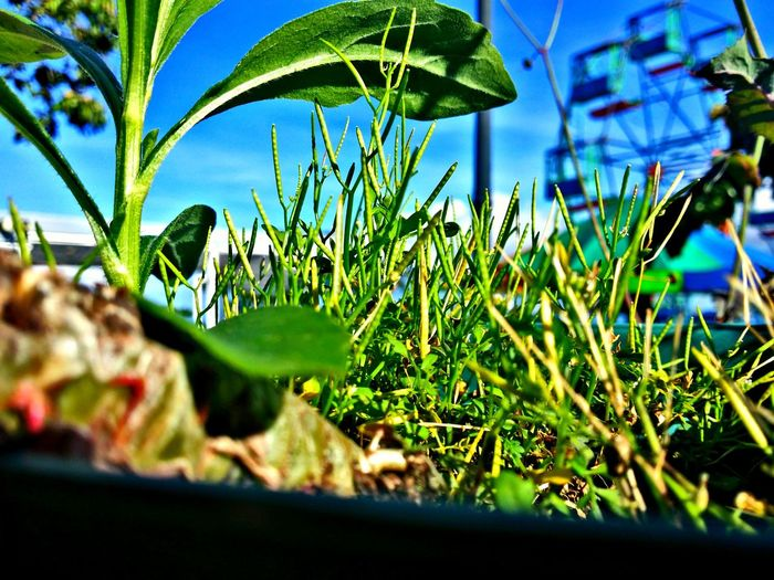 Plant Leaf Nature Green Color No People Beauty In Nature Freshness Sky Noria, Feria Another Point Of View Anothervision Day Growth