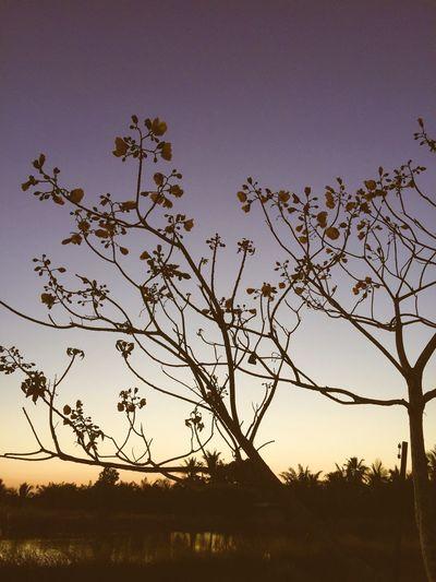 Sun set Myhometown Chanthaburi Thailand Taken By Iphone 6 Plus