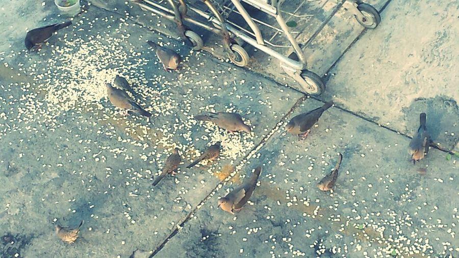 Nature Animals Eating