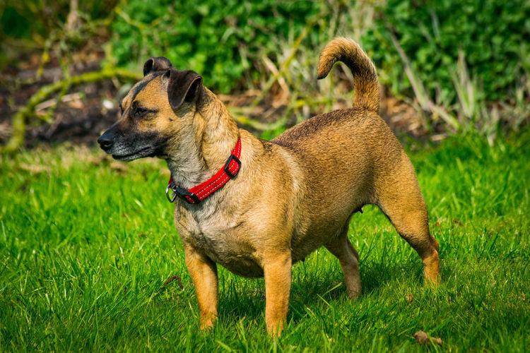 Lucy Dogs EyeEm