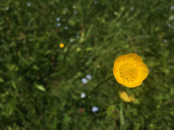EyeEmBestPics Flowers Summertime Yellow Flower Grass EyeEm Best Shots 2016