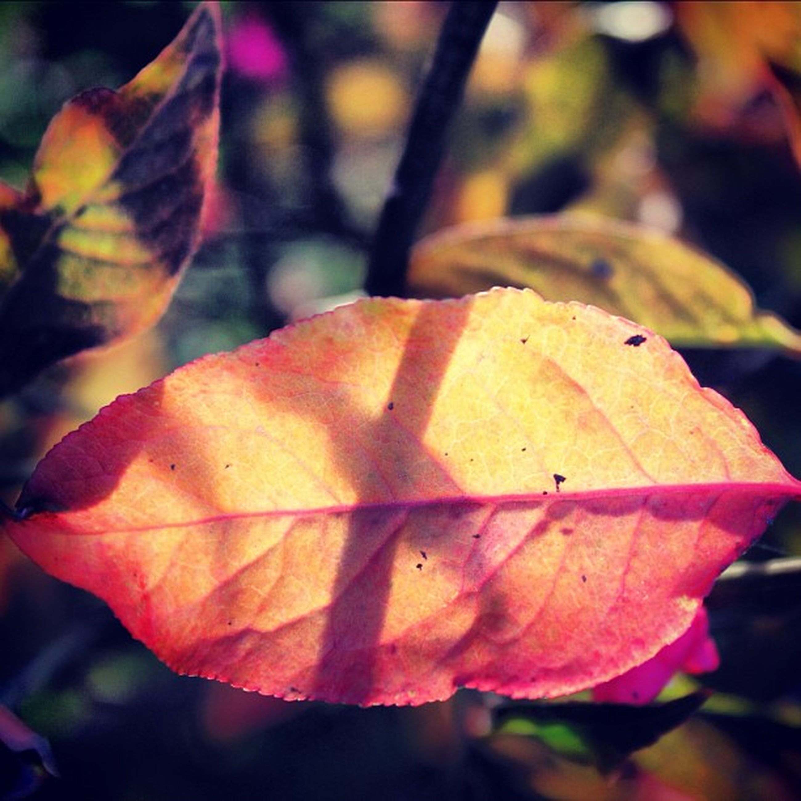 focus on foreground, close-up, orange color, leaf, autumn, nature, growth, change, leaf vein, beauty in nature, branch, natural pattern, outdoors, season, selective focus, tree, plant, fragility, no people, day