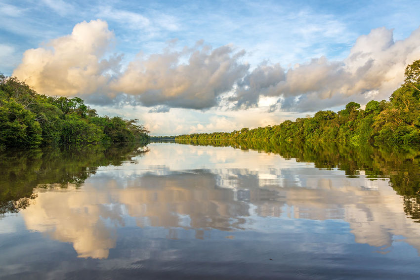 Clouds and jungle reflected in the Javari River in the Amazon rain forest in Brazil Amazon Amazonas Amazonia Brazil Forest Javari River Jungle Landscape Nature Rain Forest Rainforest Reflection Sky South America Sunrise Sunset Tourism Travel Travel Destinations