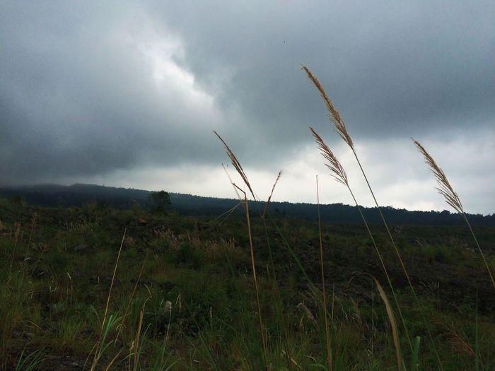 Weeds Volcanic