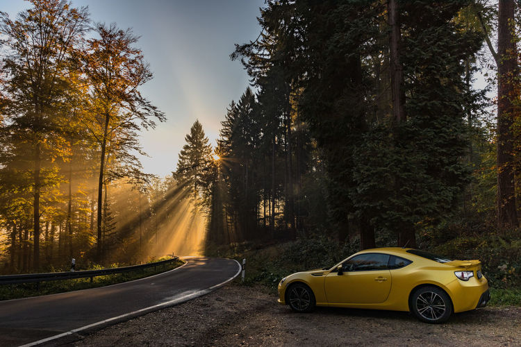 Tree Road Car Motor Vehicle Sports Car Subaru Brz Nature Forest Sunlight No People Yellow Country Road Sunrise Sunset Sunbeam Sun Rays Yellow Car Warm Autumn Autumn colors