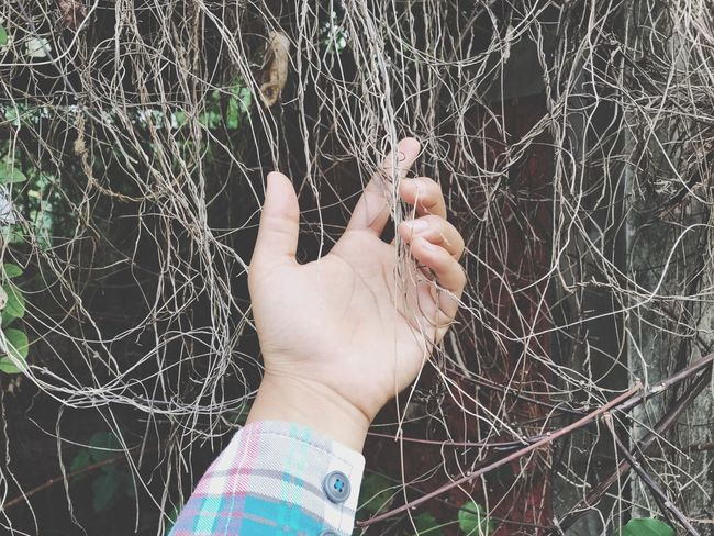Dry plants Human Hand Human Body Part One Person Outdoors Real People Leisure Activity Shades Of Winter