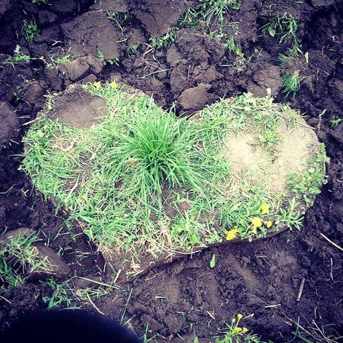 Love Heart Priroda земля Природа любовь сердце сердечко сЛюбовью